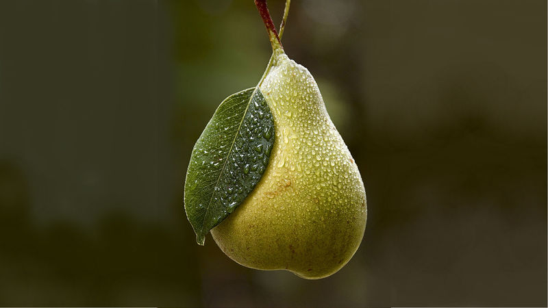 Pear hd wallpapers11